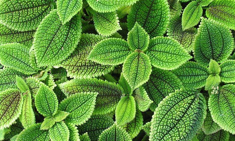Plantas para Jardines Verticales Bio sistemas urbanos Pinterest