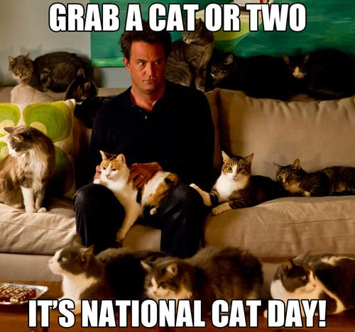 Happy Nationalcatday From Goon Cats Kittens Catday Cats Cat Day Crazy Cats