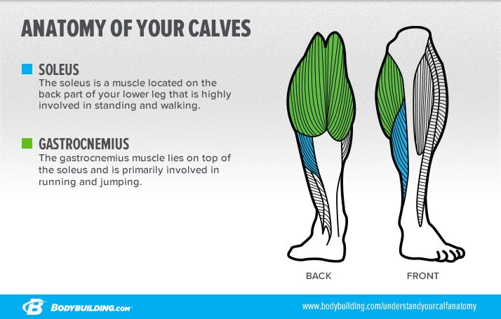 6 Lessons That Will Transform Your Calves | Fitness_Legs | Pinterest ...