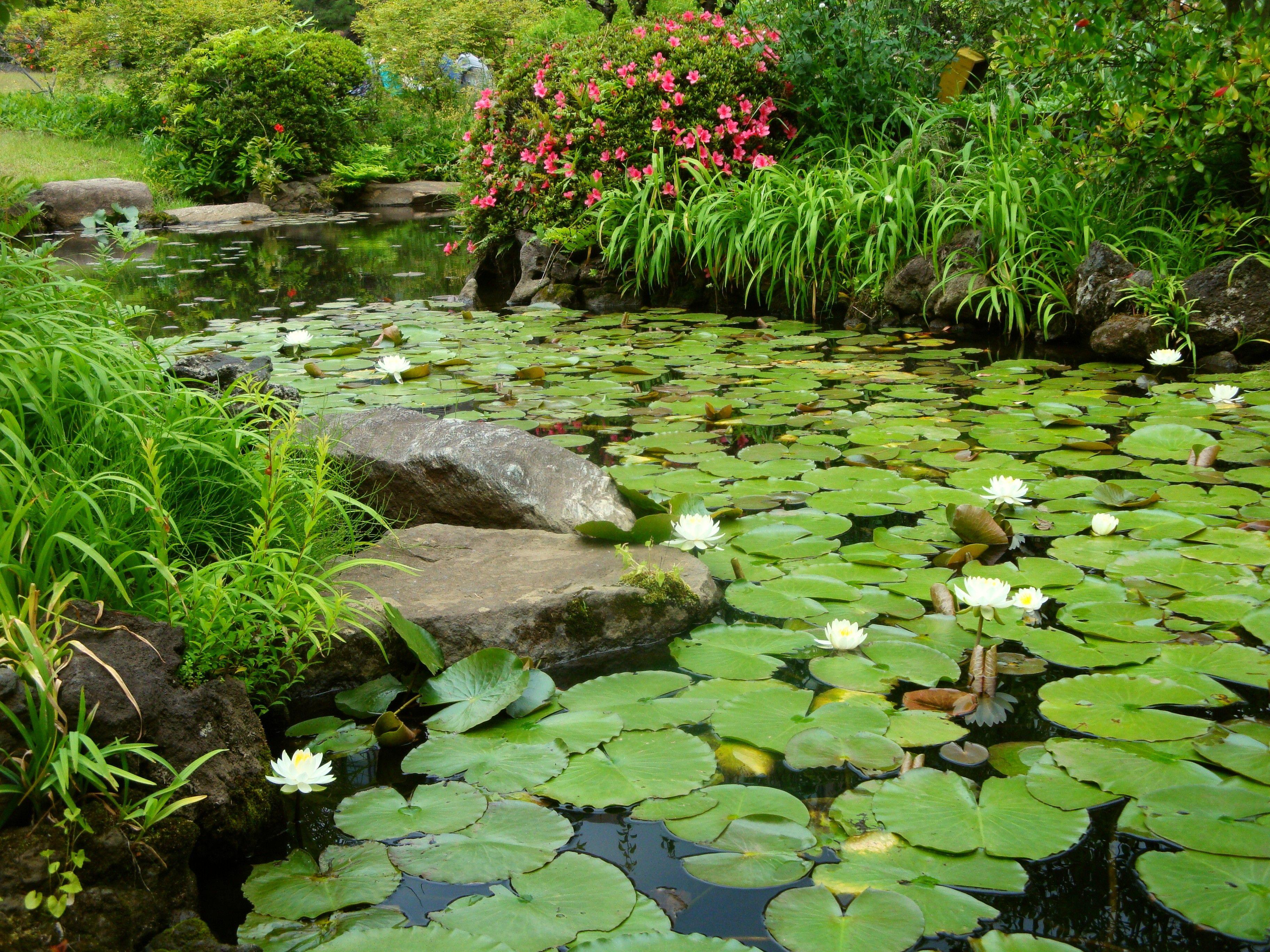 растения возле пруда фото ранние