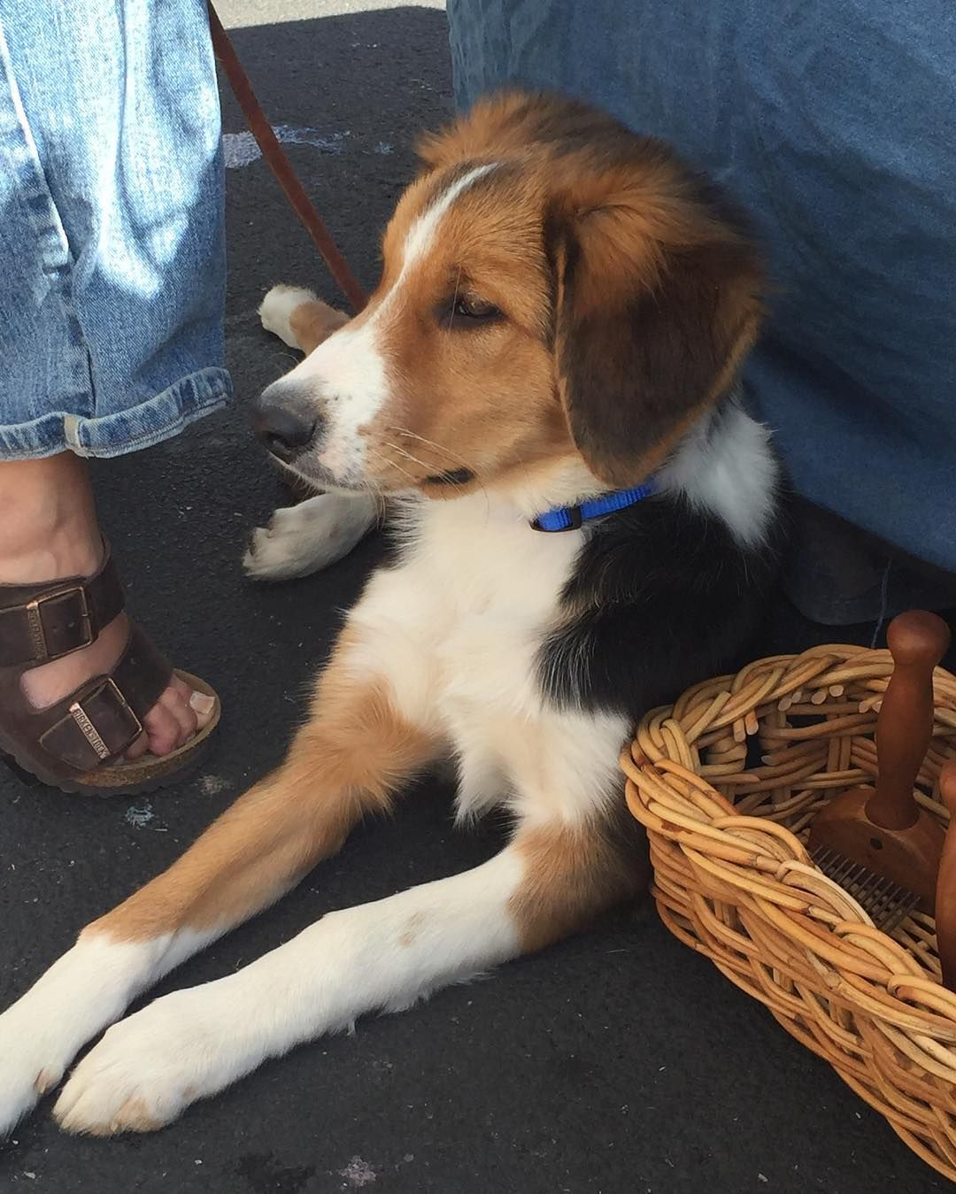 Luke Came To The Farmers Market Yesterday He Was Such A Good Boy