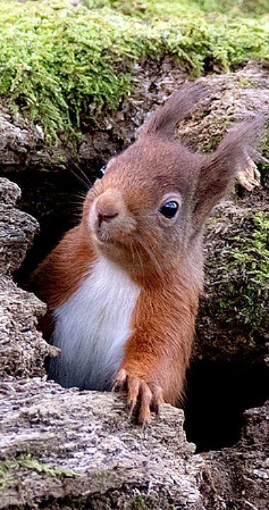 Eichhörnchen, RSPB Loch Leven - Kelly Blog #wildanimals