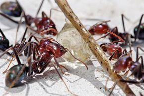 Ameisen bekämpfen: Hausmittel gegen Ameisen im Haus und Garten ...