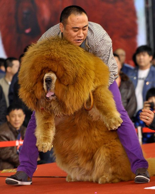 Pin By Lucero Abi13 On Cosas De Mi Pared Huge Dogs Big Dogs Animal Tracks