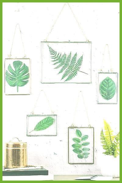 Framed Plants The Most Popular Dorm Room Trends According To Pinterest Photos diykrbis facebook b