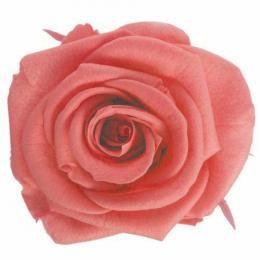 FL0100-65 Standard Rose / Pink Opal