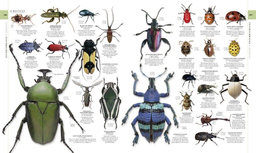 Natural history smithsonian book google 検索