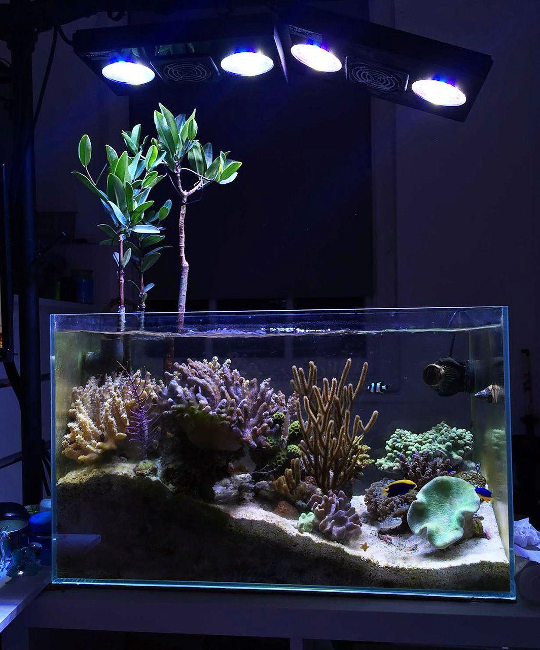 Freshwater aquarium fish profiles - East1 2016 Featured Aquariums Featured Aquariums Monthly Featured Nano Reef Aquarium Profiles