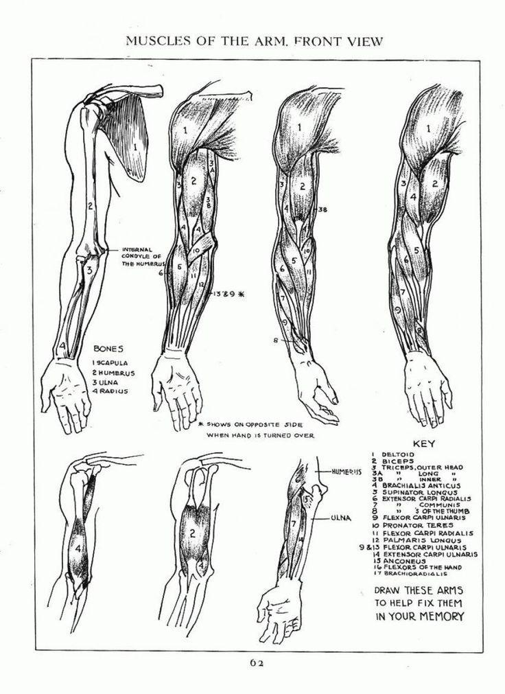 Fein Anatomie Und Physiologie Laborhandbuch Ideen - Menschliche ...
