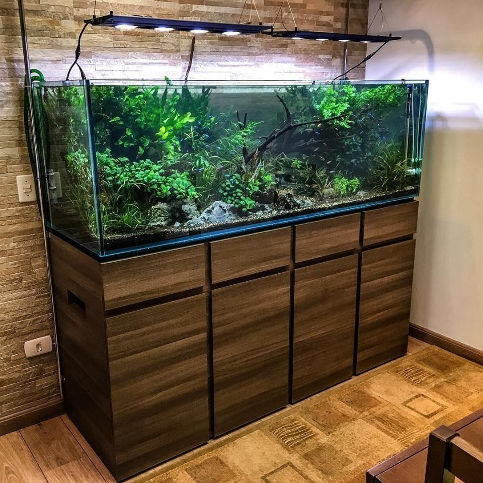 Aquariums And Aquascaping Par Trent R Maison Design