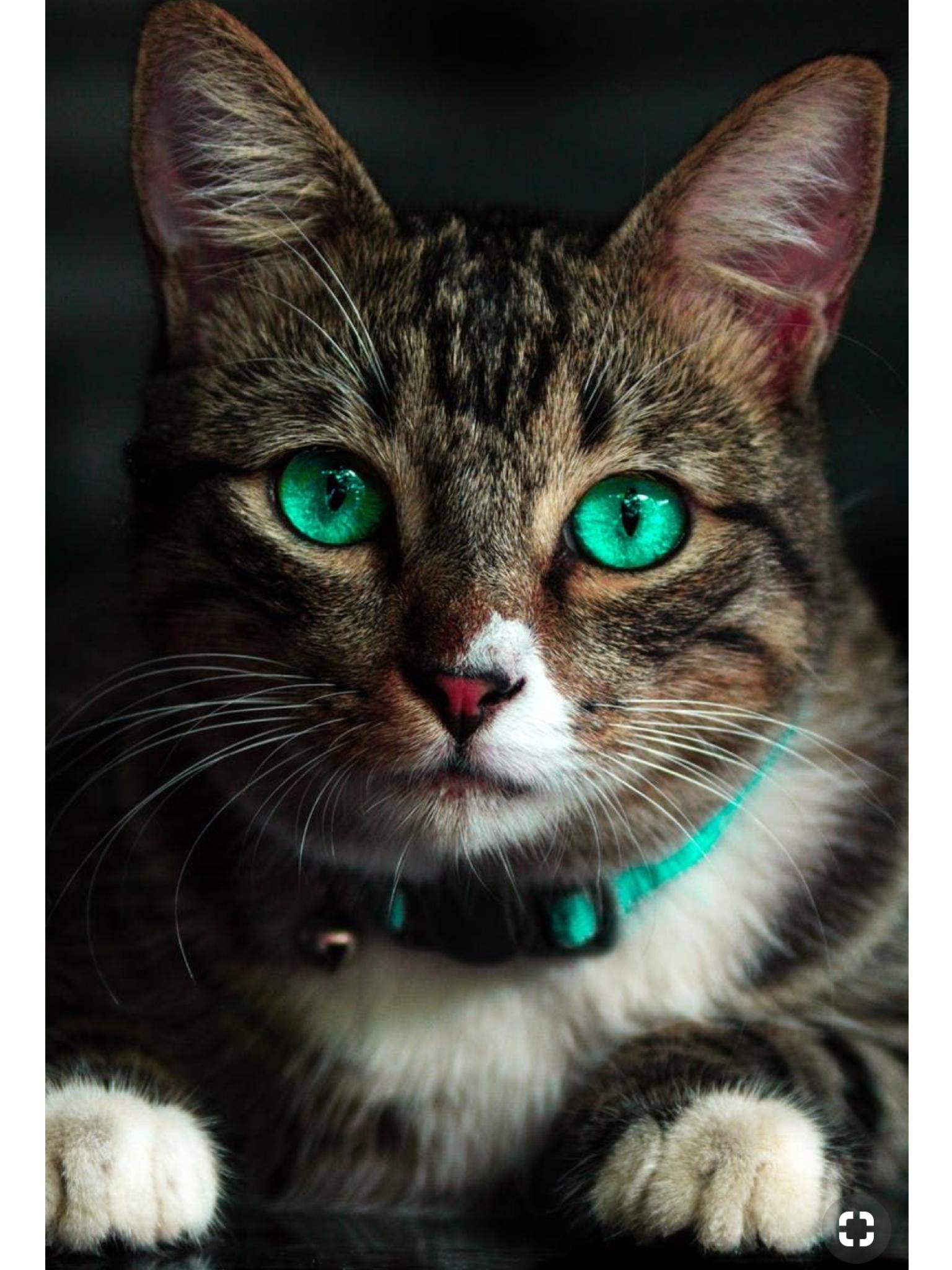 Pin By Erma Delgado On Adorable Cute Cats Beautiful Cats Cute