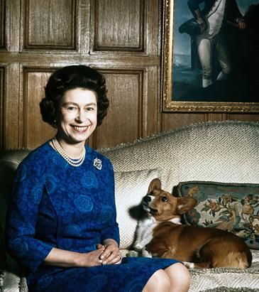 Queen Elizabeth II with one of her corgis at Sandringham, 1970. Corgis can be vicious. Over the years, the queen's corgis have nipped the royal clockwinder, torn the seat out of an officer's trousers and even bitten her majesty. In 1989, one of the Queen Mother's corgis killed the Queen's dog, Chipper. (Hulton Archive/Getty Images)