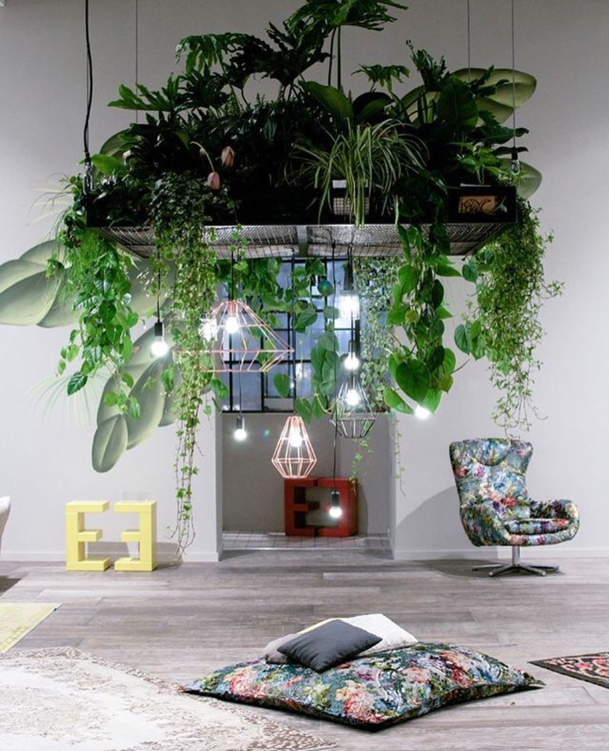 Cool Plants For Your Room Living Room Next To Back Door Higher Remove Light And