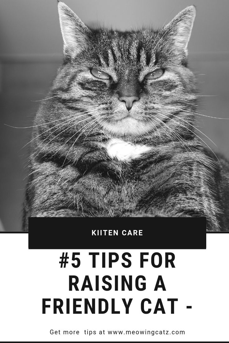 5 Tips For Raising A Friendly Cat Raising Kittens Baby Cats Cats