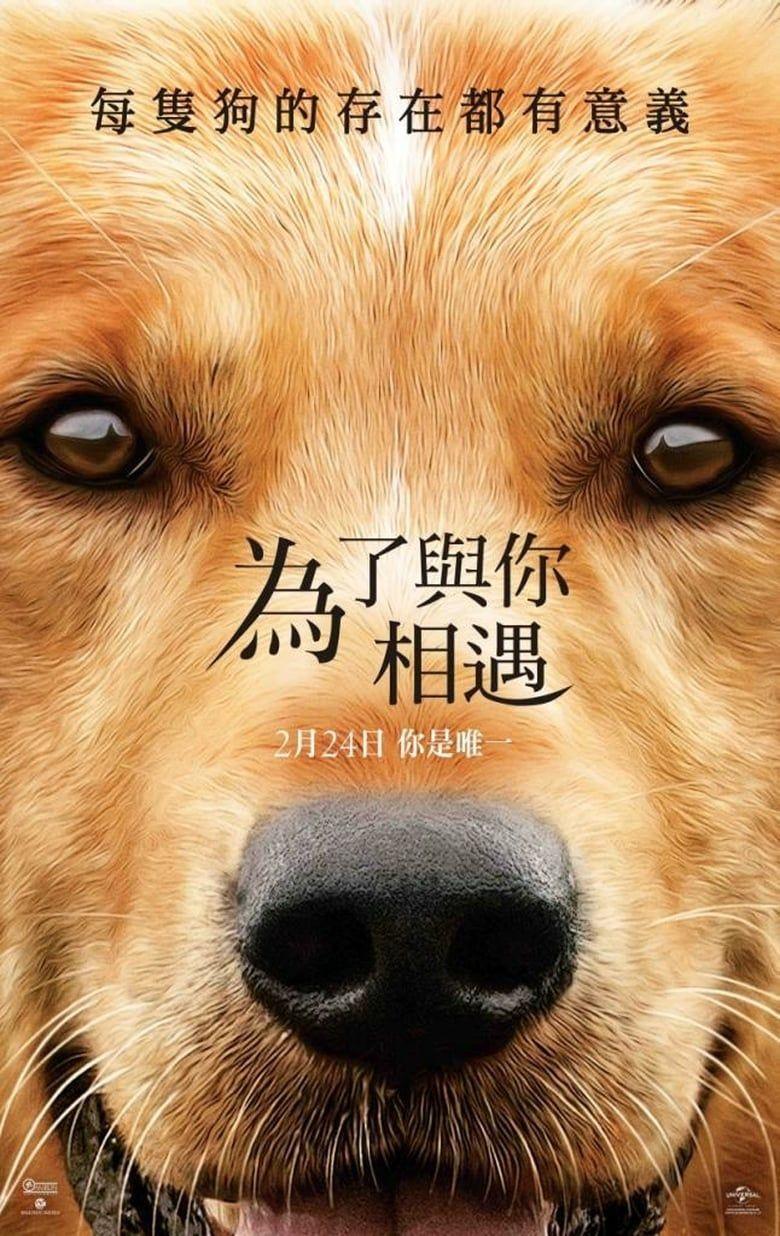 A Dog S Purpose Teljes Film Magyarul Videa Adog Spurpose Hungary Magyarul Teljes Magyar Film Vid A Dogs Purpose A Dogs Purpose Movie Tv Series Online