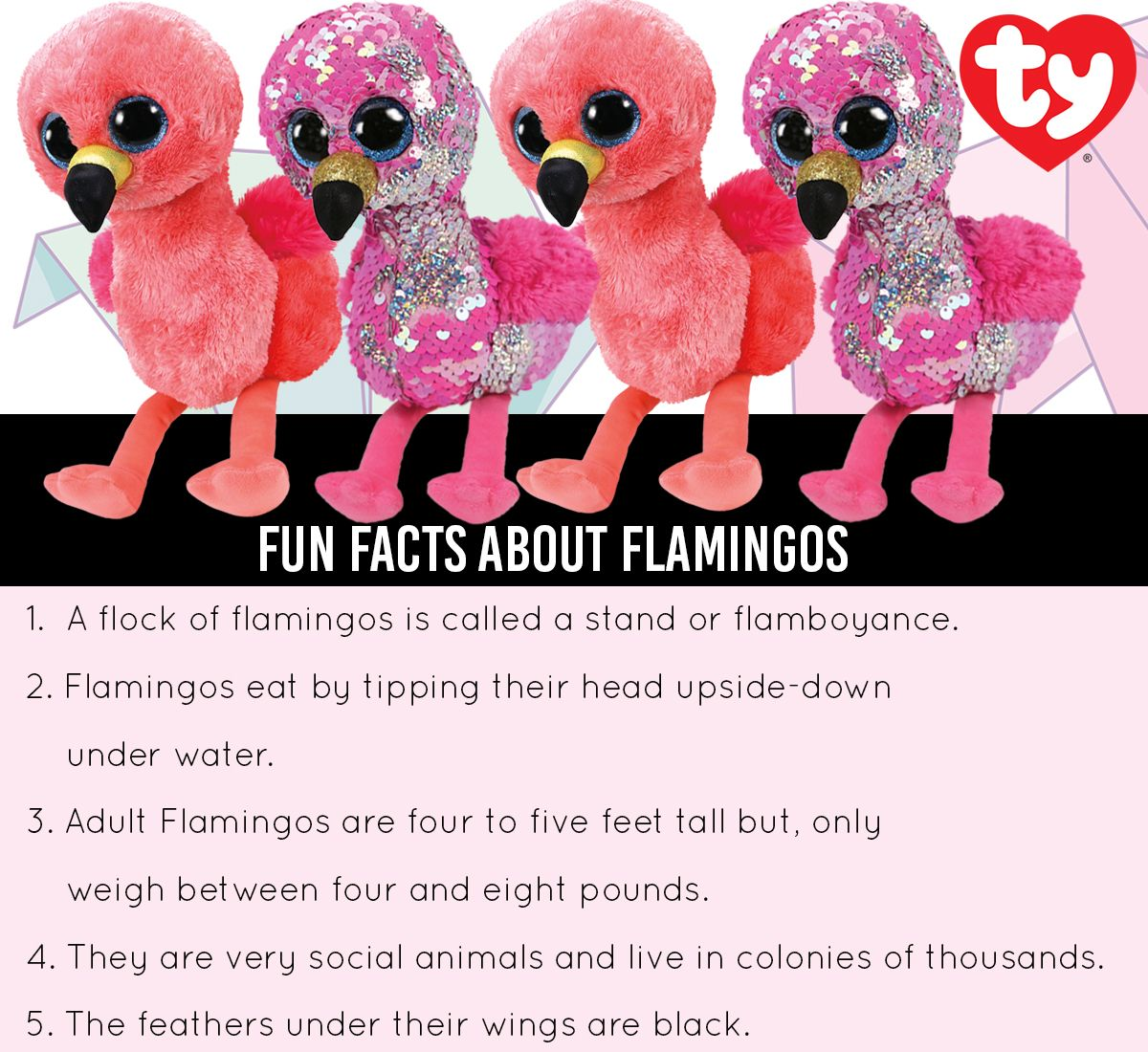 Fun facts about Flamingos. Ty Flippables Gilda Flamingo and Ty Gilda Beanie  Boo. d6fd7d36dc83