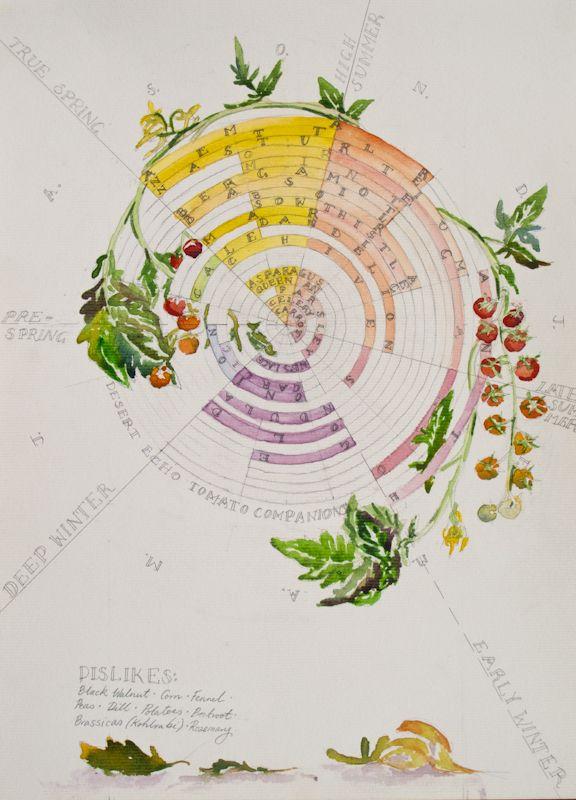 Tomato Companion Plant Chart Sowing Times Companion 400 x 300