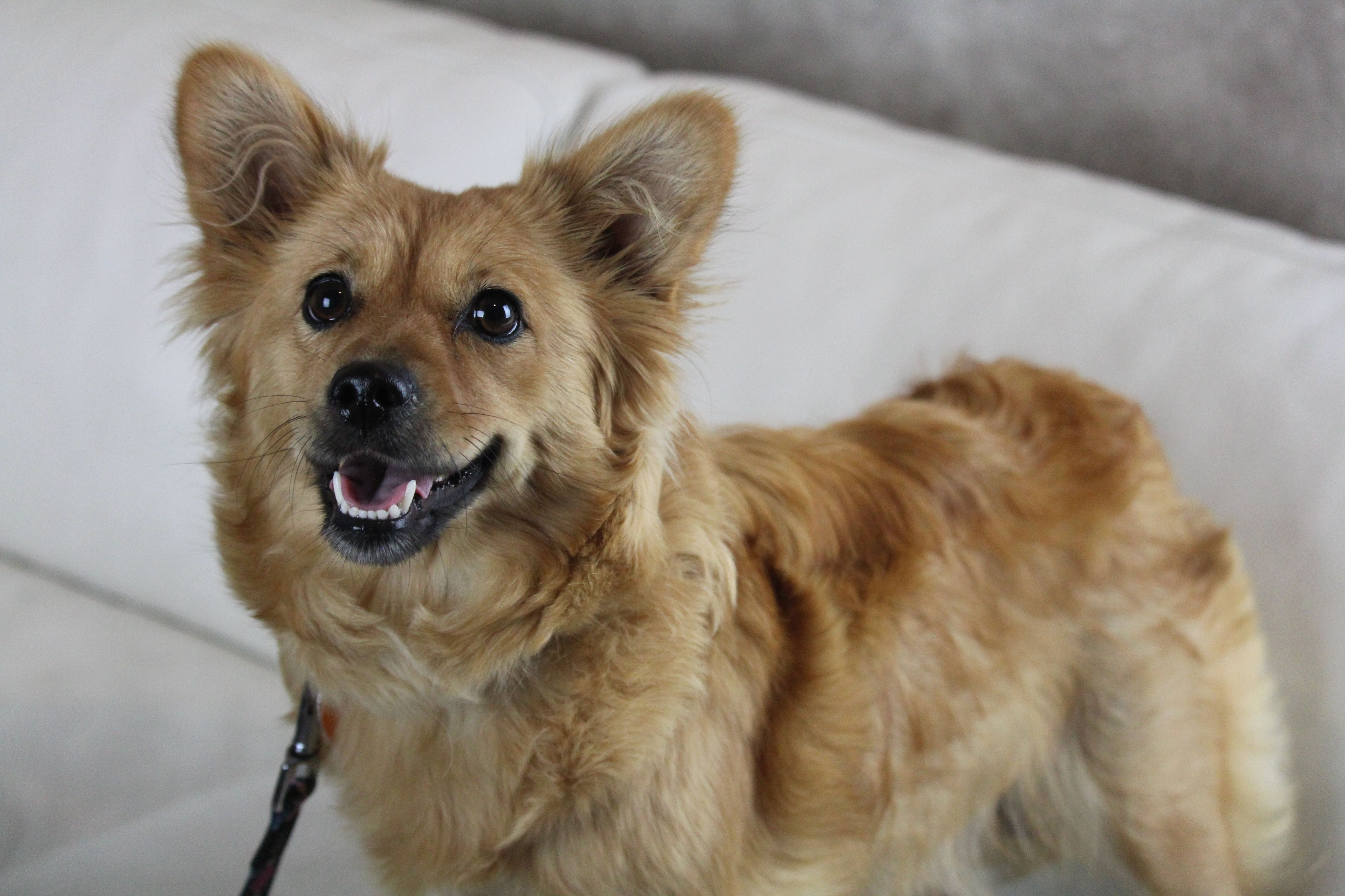 Adopt Olivia on Rescue dogs, Dogs,