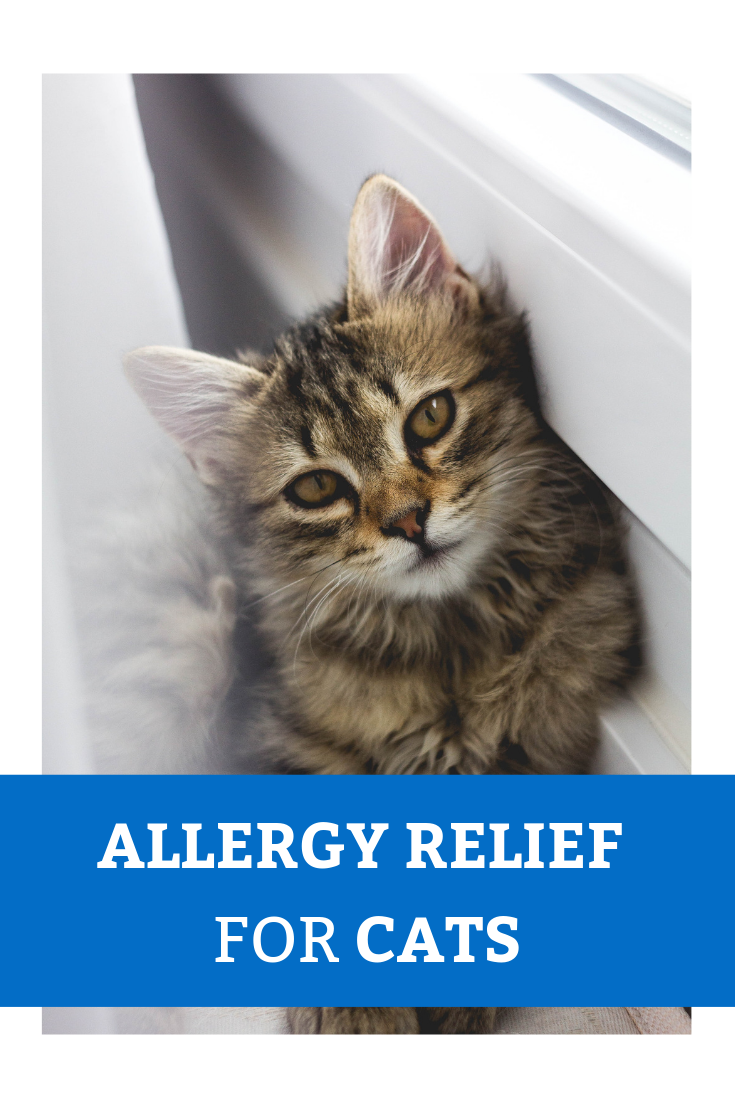 Allergies in Cats How to Care for Your Feline Companion