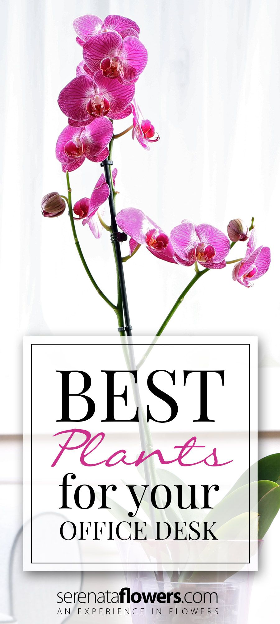 Best House Plants For Office Desk Gardening Tips And Ideas