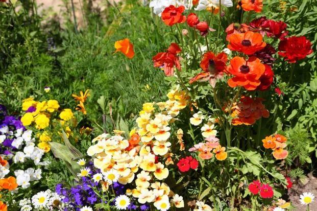 Lato W Ogrodzie Zdjecia Pieknych Letnich Ogrodow Small House Home And Garden Garden