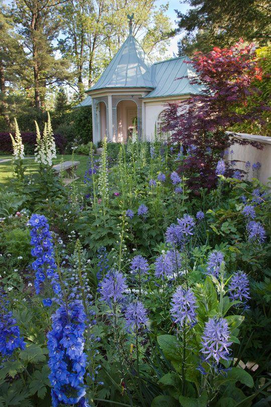 Delphiniums, Camassia leichtlinii 'Blue Danube' , Digitalis purpurea 'Camelot White' and the burgundy Acer palmatum 'Bloodgood' grow in the newly created Swimming Pool Border at Chanticleer. 코리아카지노 (→RPET7.COM ←) 코리아카지노코리아카지노코리아카지노