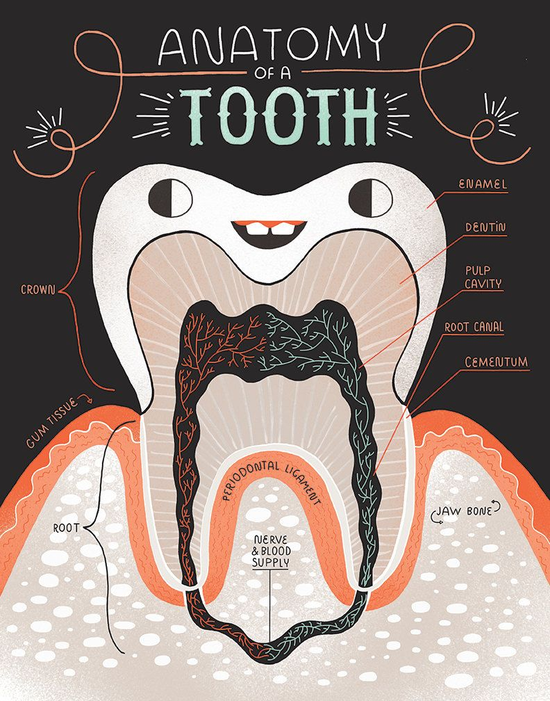 Anatomy Of A Good Tooth And Bad Tooth Two Art Print Set In 2018