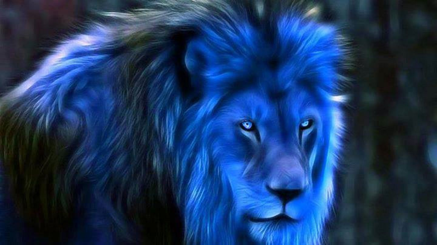 Midnight Blue Fantasy Blue Lions Wallpapers Wallpapers