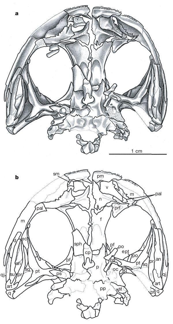 Pin op fossielen & evolutie:salamanders