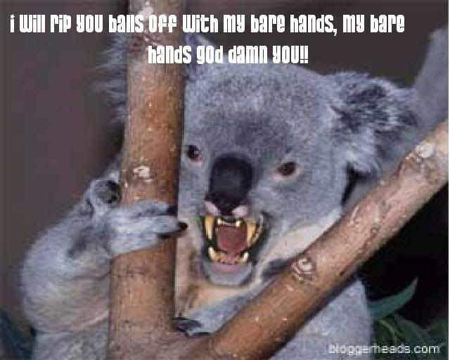 evil koala meme - Google Search | Funny stuff | Drop bear ...