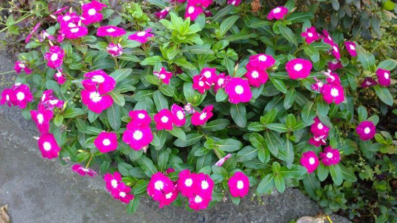 Flores muy pintorescas