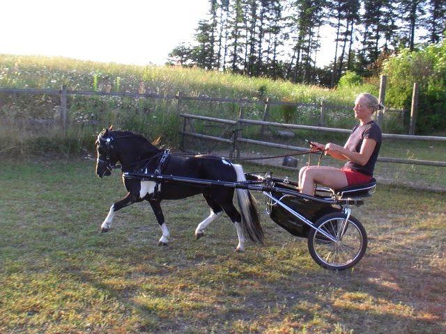 pleasure carts 60 shaft pony inch