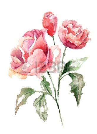Botanical Drawing Images, Stock Pictures, Royalty Free Botanical Drawing Photos And Stock Photography