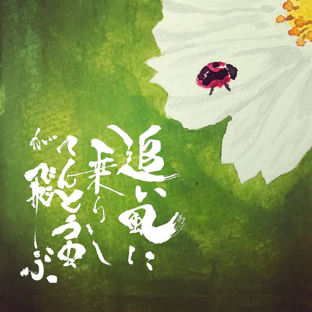ばたやん 田畑茂人 On Instagram 今年初めて てんとう虫を見かけ