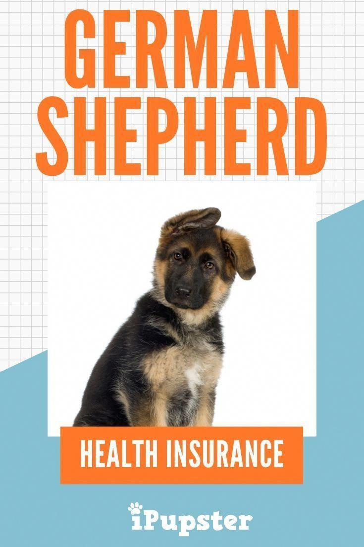 Wonderful Pic First Time German Shepherd Owner Advice On What Pet Insurance You Should G Health Insurance Options Individual Health Insurance Health Insurance