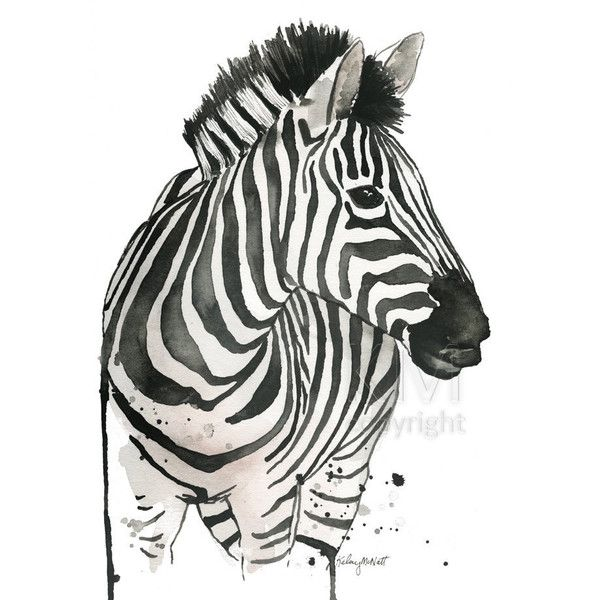 Watercolor Painting Print Zebra Stripes Animal Home Office Decor And 10 Liked On Polyvore Featuring Wall Art Animals