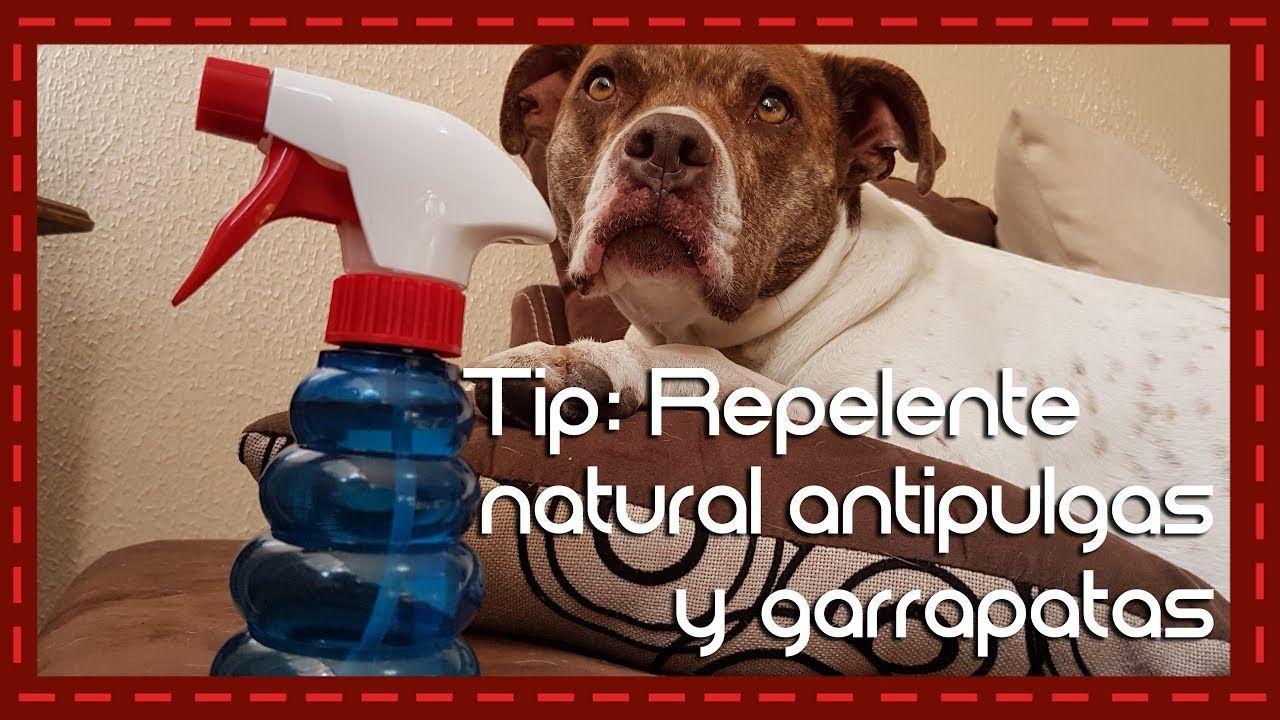 Tip: Repelente natural antipulgas y garrapatas para perros y gatos