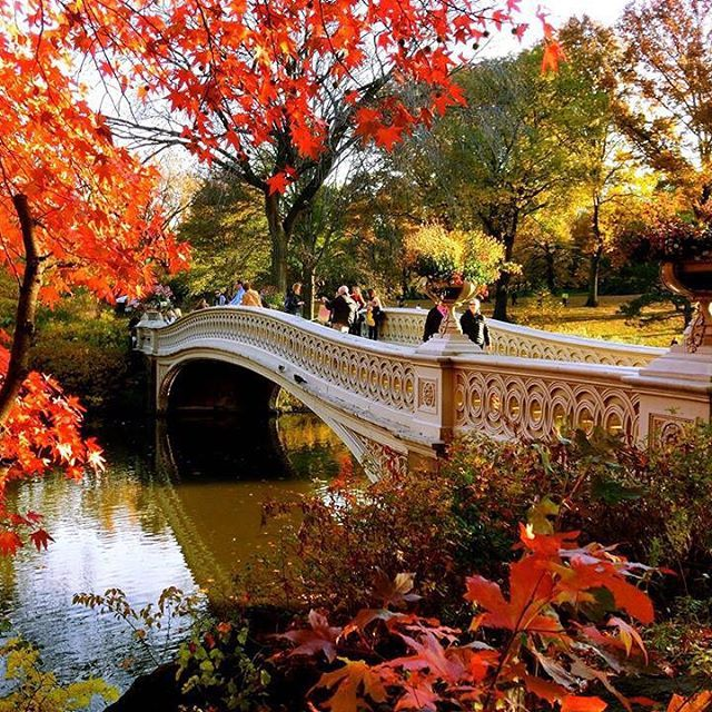 by Daisuke Chihara via Instagram   #autumninnewyork #autumncolors #autumnleaves #fall #fallcolors #newyork #nyc #cityscape #bowbridge #centralpark