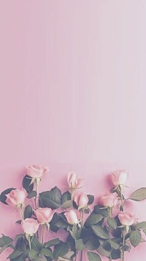 Pink Rose And Wallpaper Image Pink Wallpaper Iphone Daisy Wallpaper Floral Wallpaper