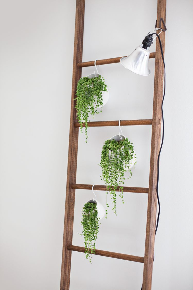 Diy Ladder With Faux Succulents Hanging From S Hooks And
