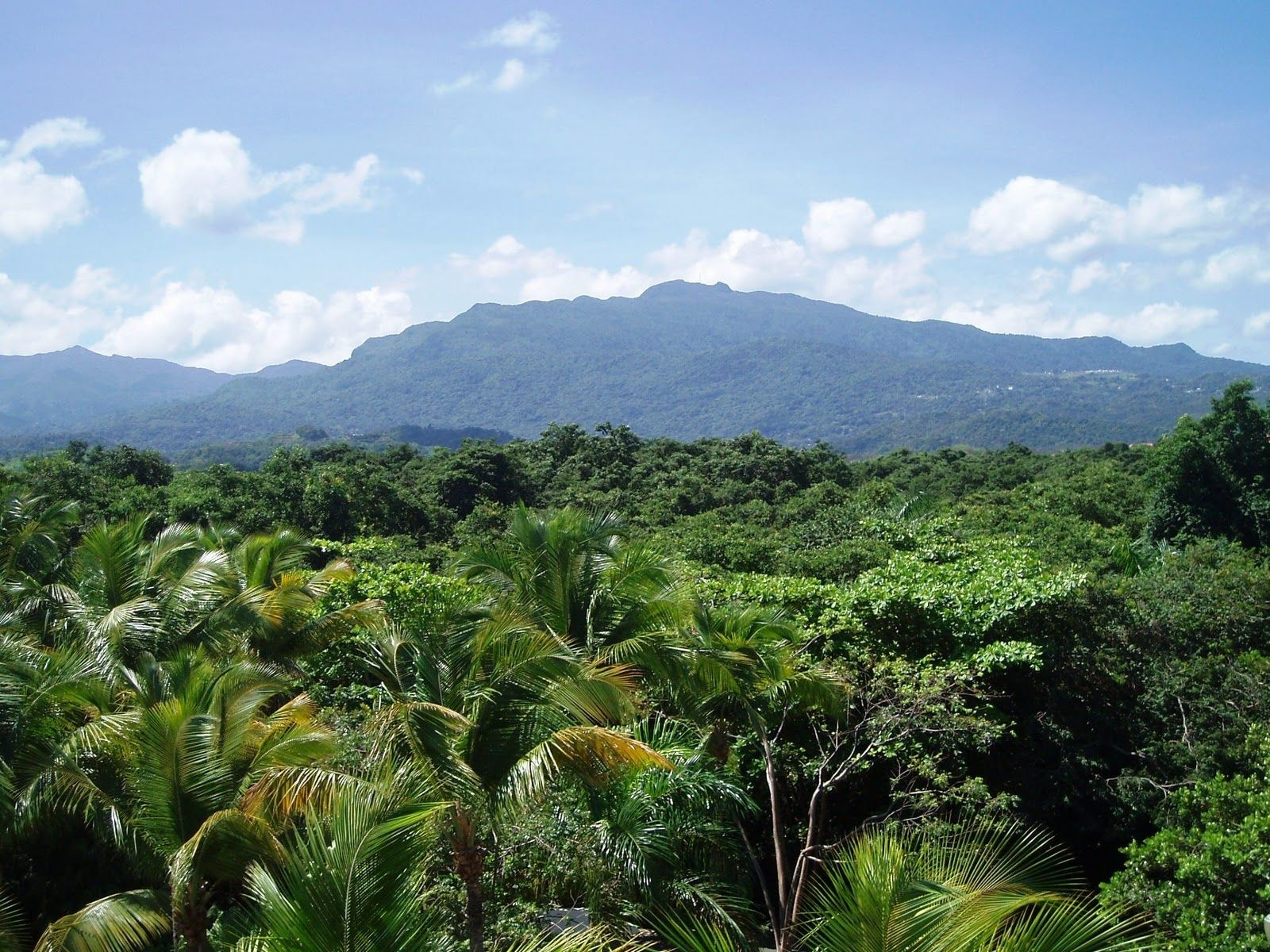 The Intrigue Of Visiting The El Yunque Rain Forest Is