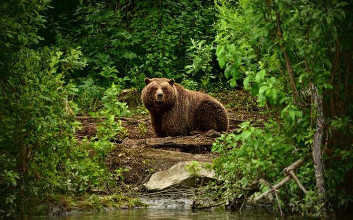 緑の中にいる1匹の熊