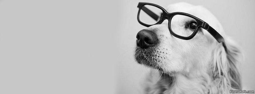 Portada Facebook Perro Con Gafas Portadas Portadas Para