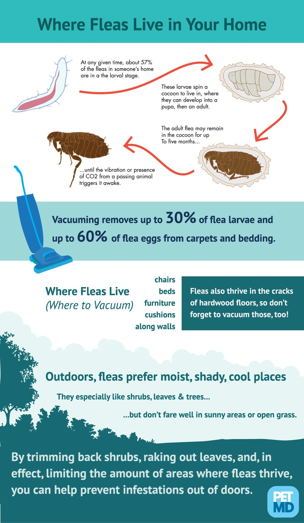 Flea Habitats At Home Fleas Termite Control Termite Treatment
