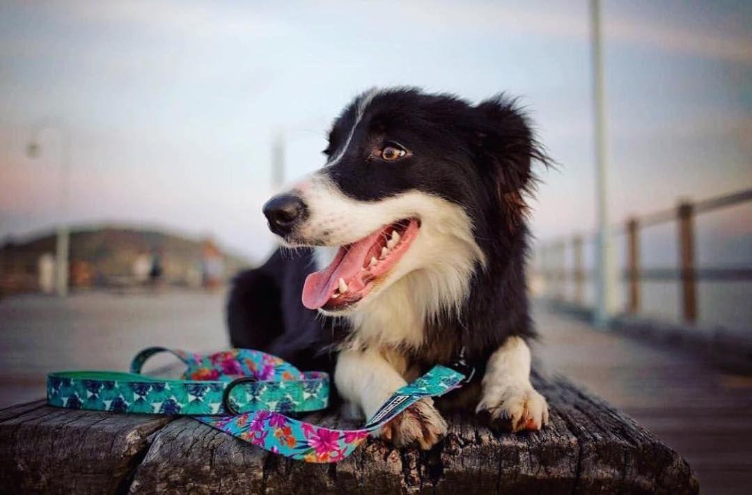 B I G L I T T L E D O G S Bigandlittledogs On Instagram