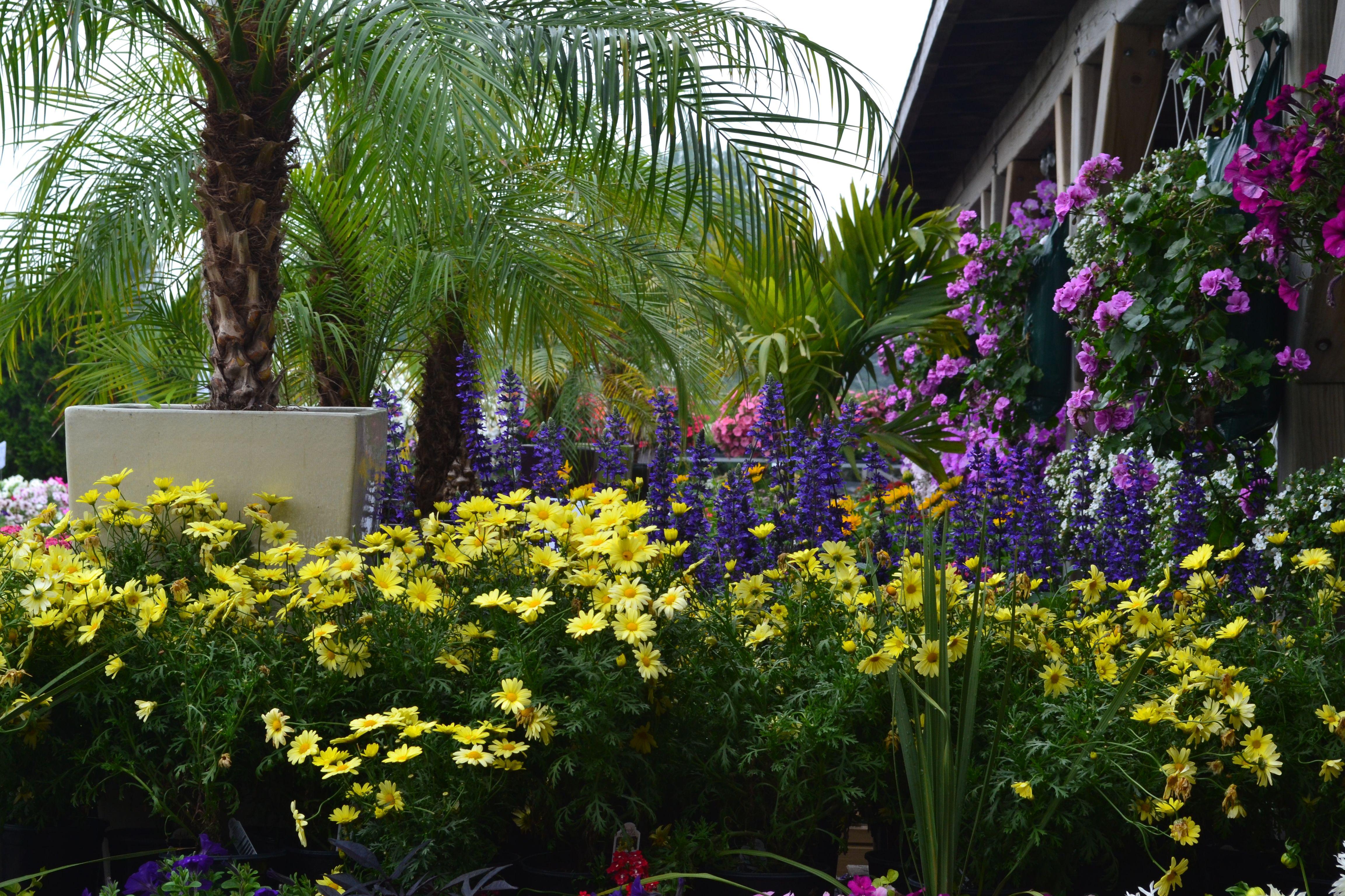 Les serres Benoit le plus beau centre de jardin au Quebec ...
