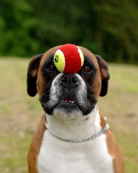 Super self control #Boxer