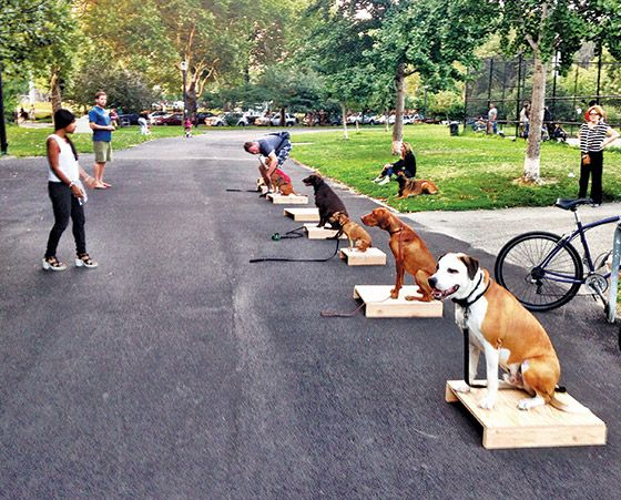 Best Dog Trainer Dog Training Best Dogs Dogs