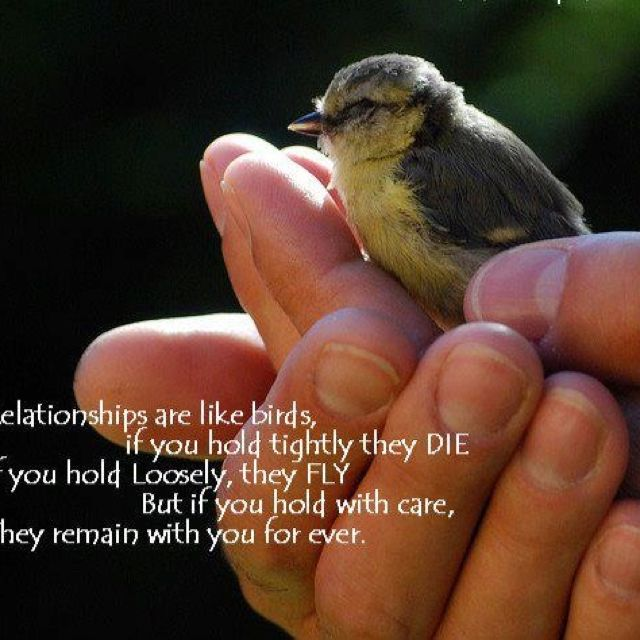 Relationships Are Like A Bird Inspirational Quotes Pictures Relationship Picture Quotes