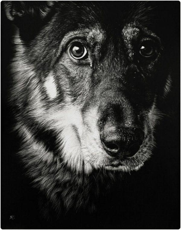 12 Hyper Realistic Animal Photos 2 Dogs In 2019 Scratchboard Art